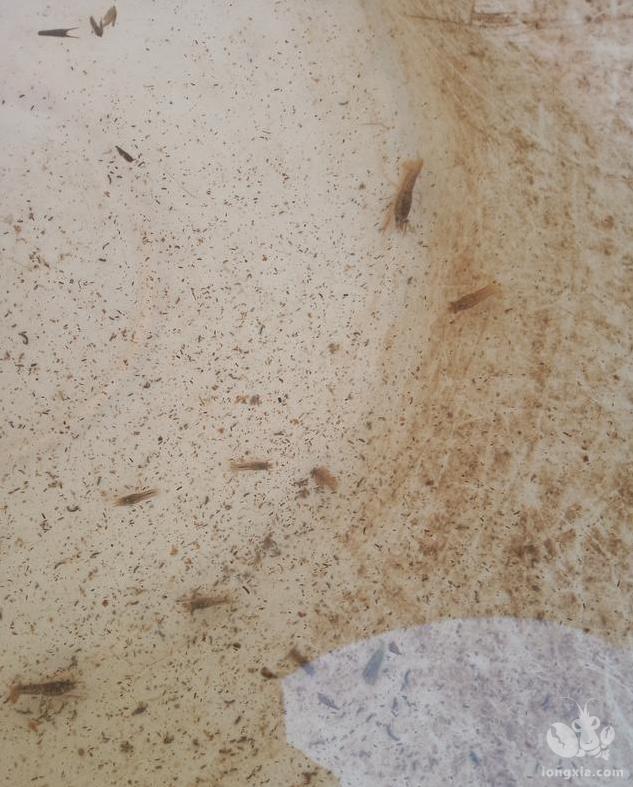 冬季给小龙虾投喂豆浆的全过程,浸泡,打磨,投喂全部在这里