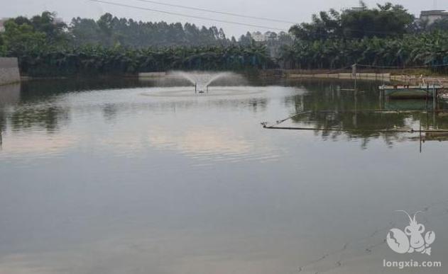 小龙虾养殖新塘如何做好清塘消毒工作?