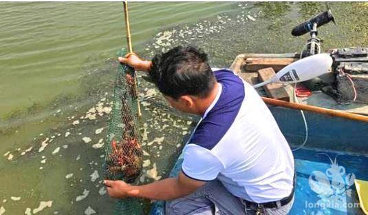 了解小龙虾补钙事宜,提高小龙虾养殖产量