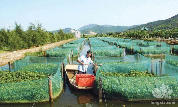 小龙虾养殖可以自己繁育龙虾苗吗?小龙虾苗半人工繁育的方法
