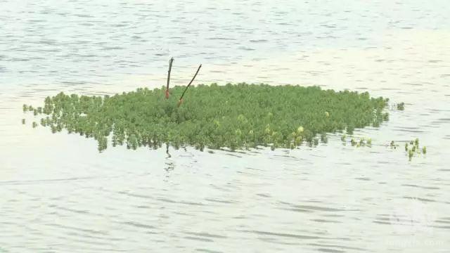 小龙虾养殖要怎么管理水质?