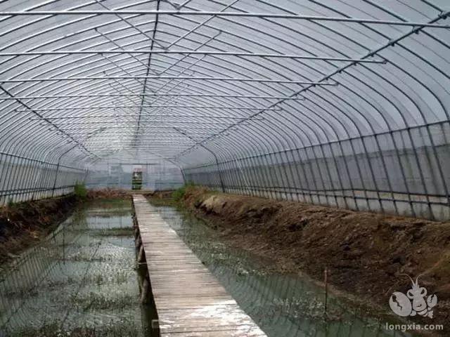 反季节冬棚养殖小龙虾技巧分析