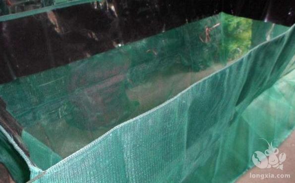 农村养殖小龙虾可以采用网箱,这种养殖方式并不难,养殖技术分析