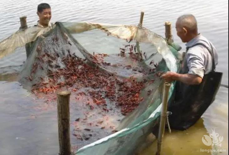 有什么方法可以让小龙虾至少提前10天上市,饵料系数还更低