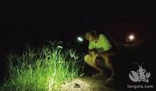 小龙虾养殖为什么要夜间巡塘?晚上巡塘你会有意想不到的收获