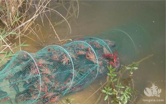 如何使小龙虾生长更快?