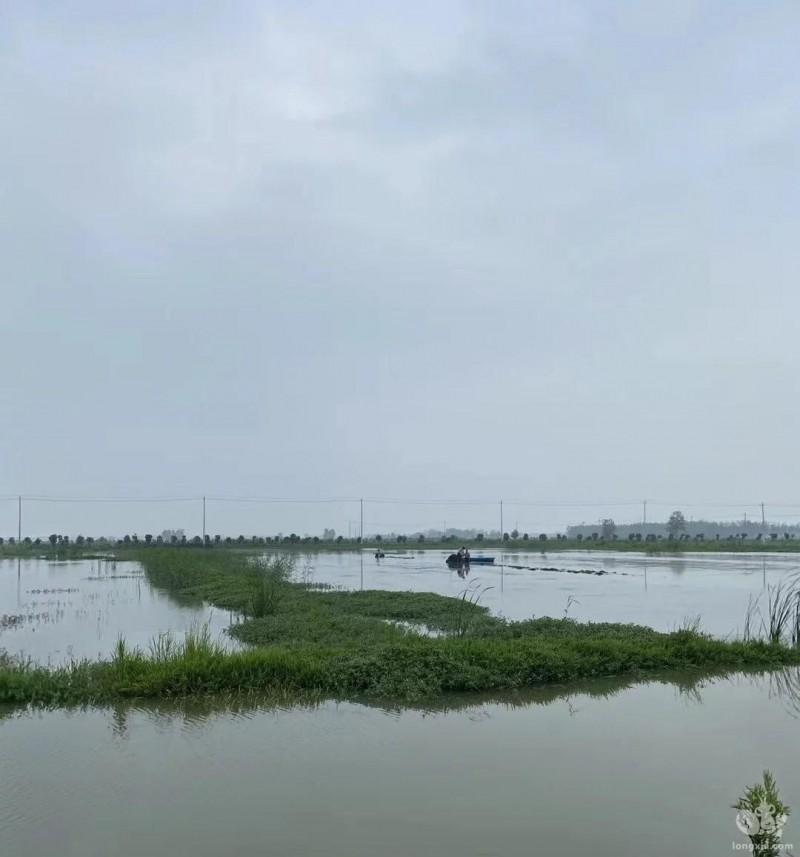 天气多变,下雨天的虾塘应该怎么处理呢?