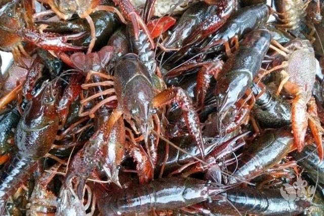 养殖户取得了不错的效益,原因是做到了小龙虾养殖的三大把关