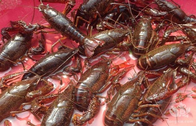 养虾过程中存在的问题