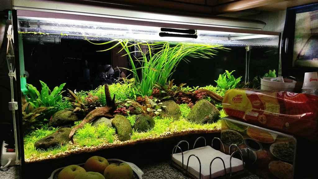 120cm国外精美草缸造景作品欣赏
