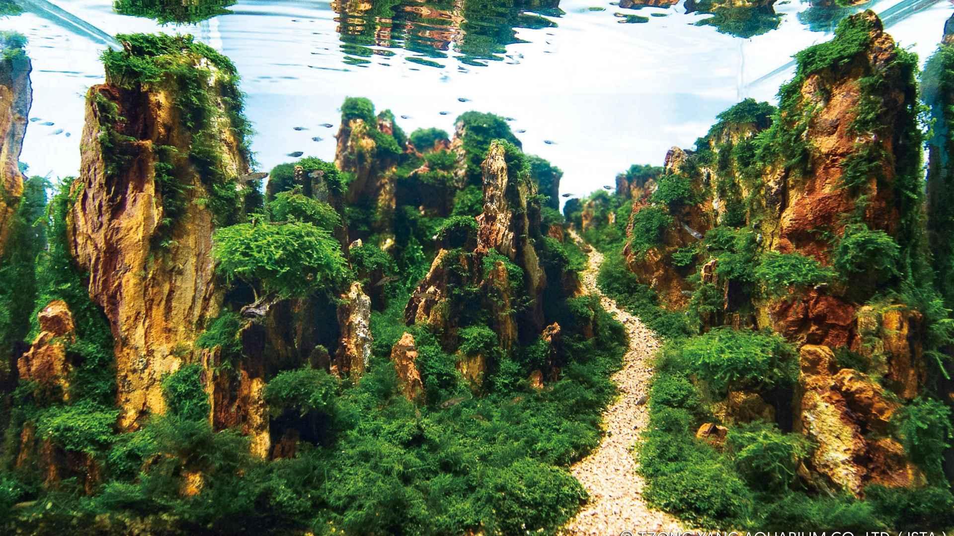 伊士达IIAC2015水草造景大赛61~70造景图片欣赏