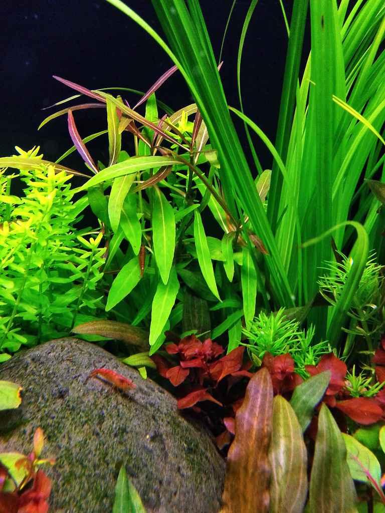 flickr上看到的一个国外的水草缸造景作品!美翻了