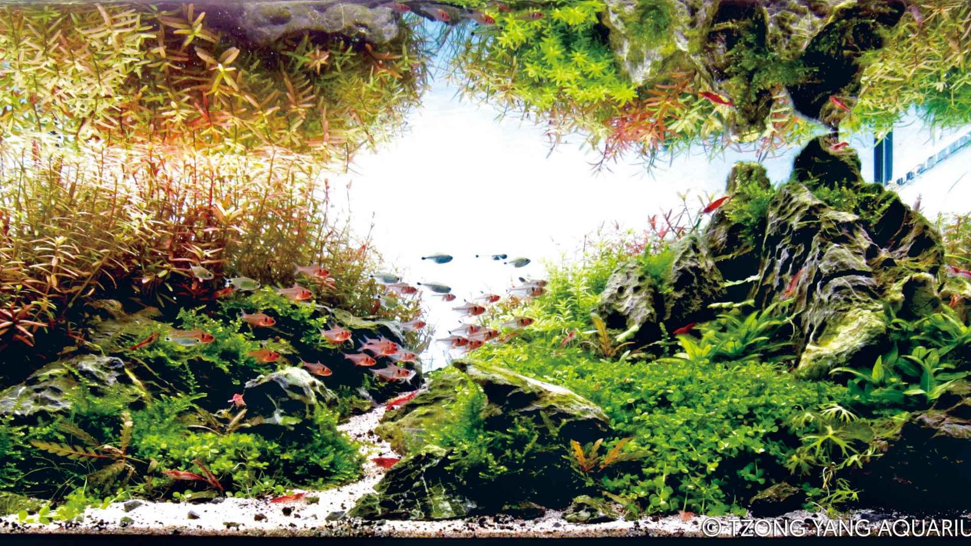 伊士达IIAC2015水草造景大赛51~60造景图片欣赏