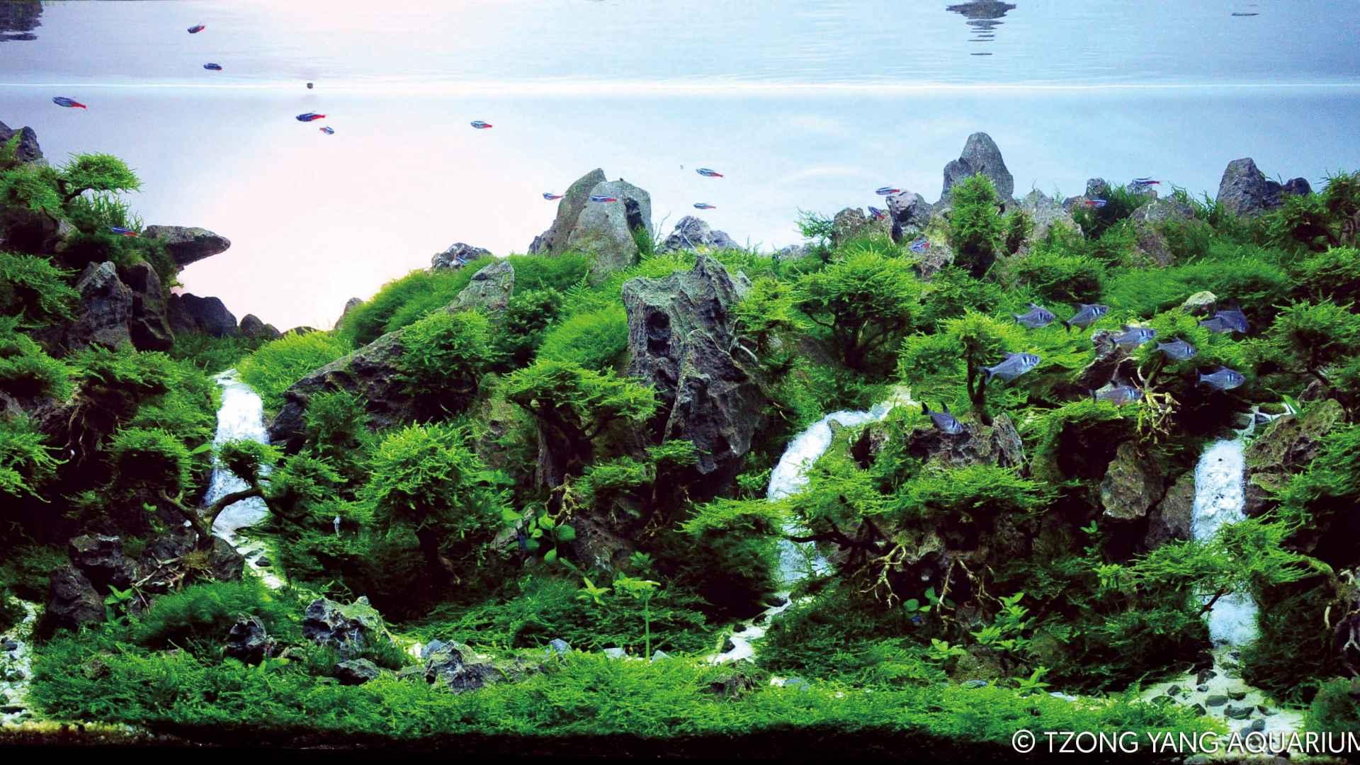 第54名 – 越南 – Hung Luong Quoc – Green Valley – 320L 以上