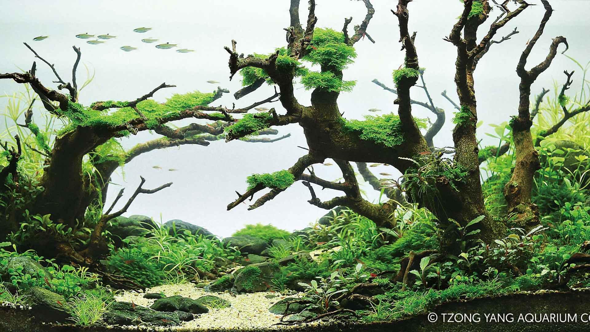 第56名 – 泰国 – Jirawong Laopiyasakul – Wicked Witch Forest – 60L ~ 120L