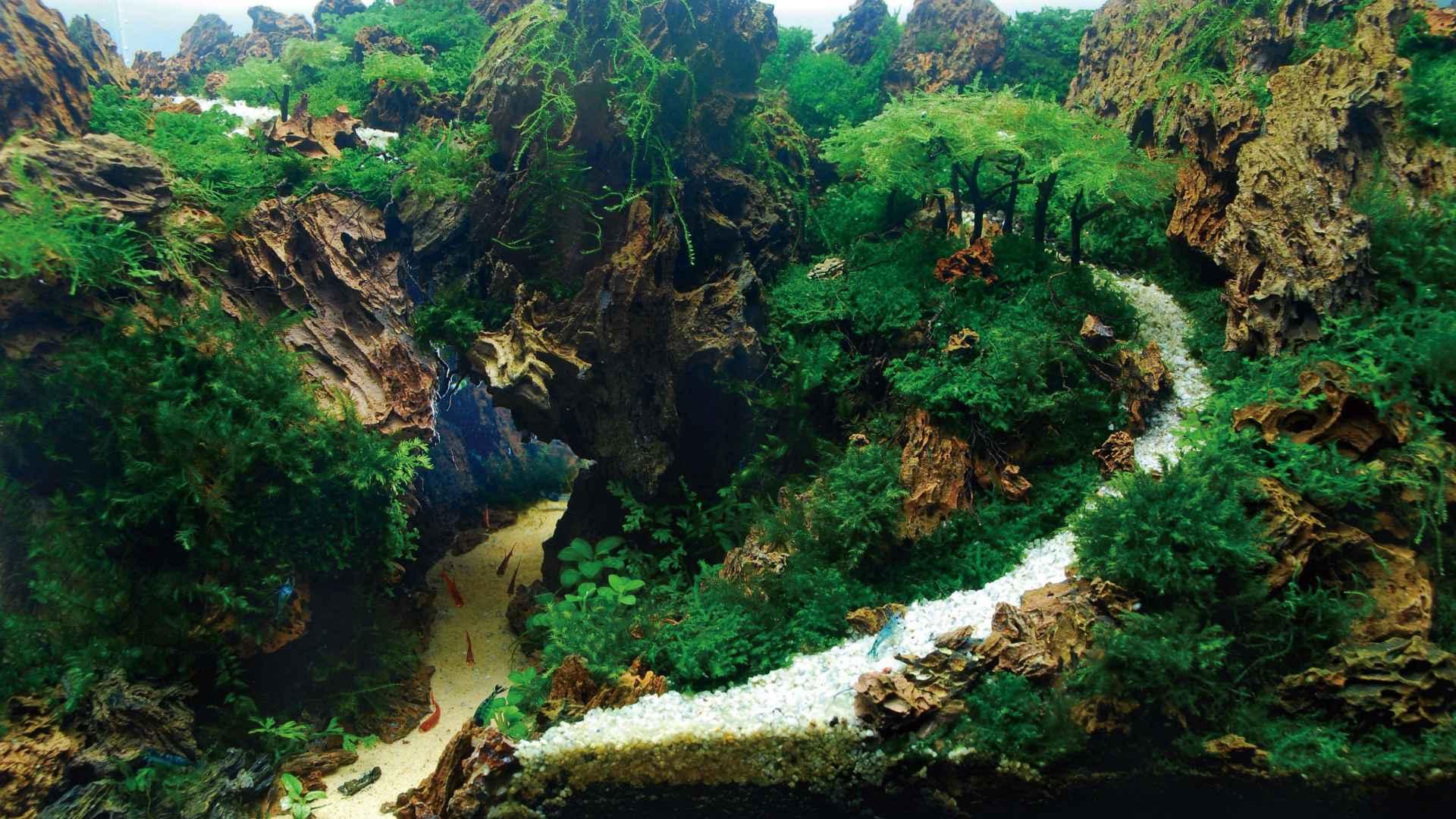 第59名 – 印尼 – Dama Refiyuda – The Road of Mountain – 28L 以下