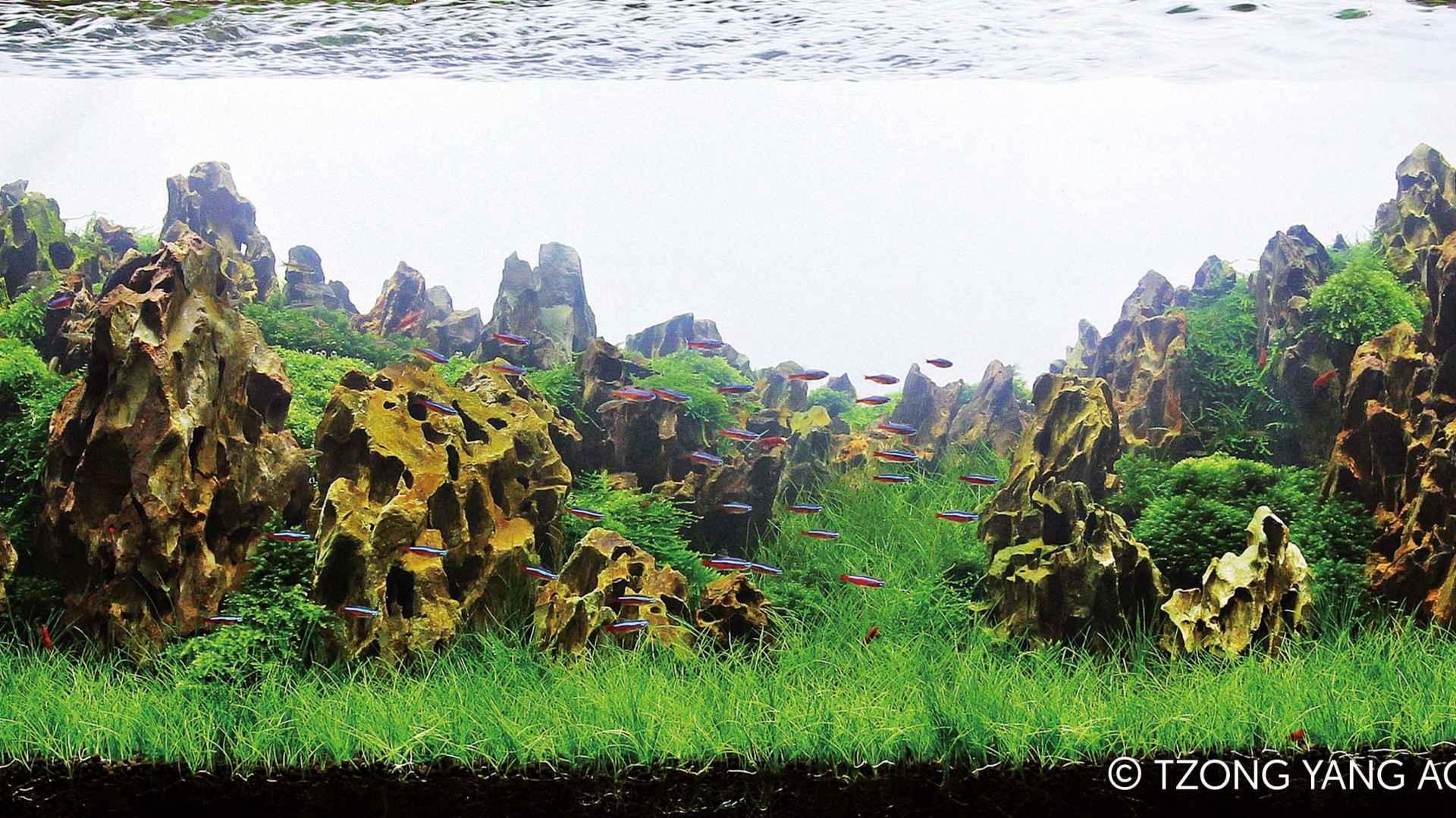 伊士达IIAC2015水草造景大赛41~50造景图片欣赏