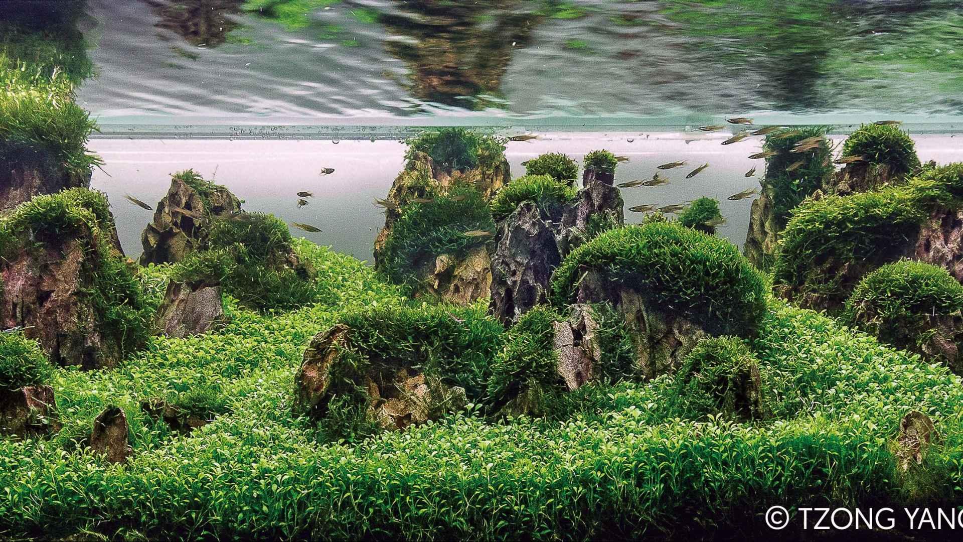 第50名 – 法国 – Emmanuel BULTEL – Les Piliers de la Nature – 200L ~ 320L