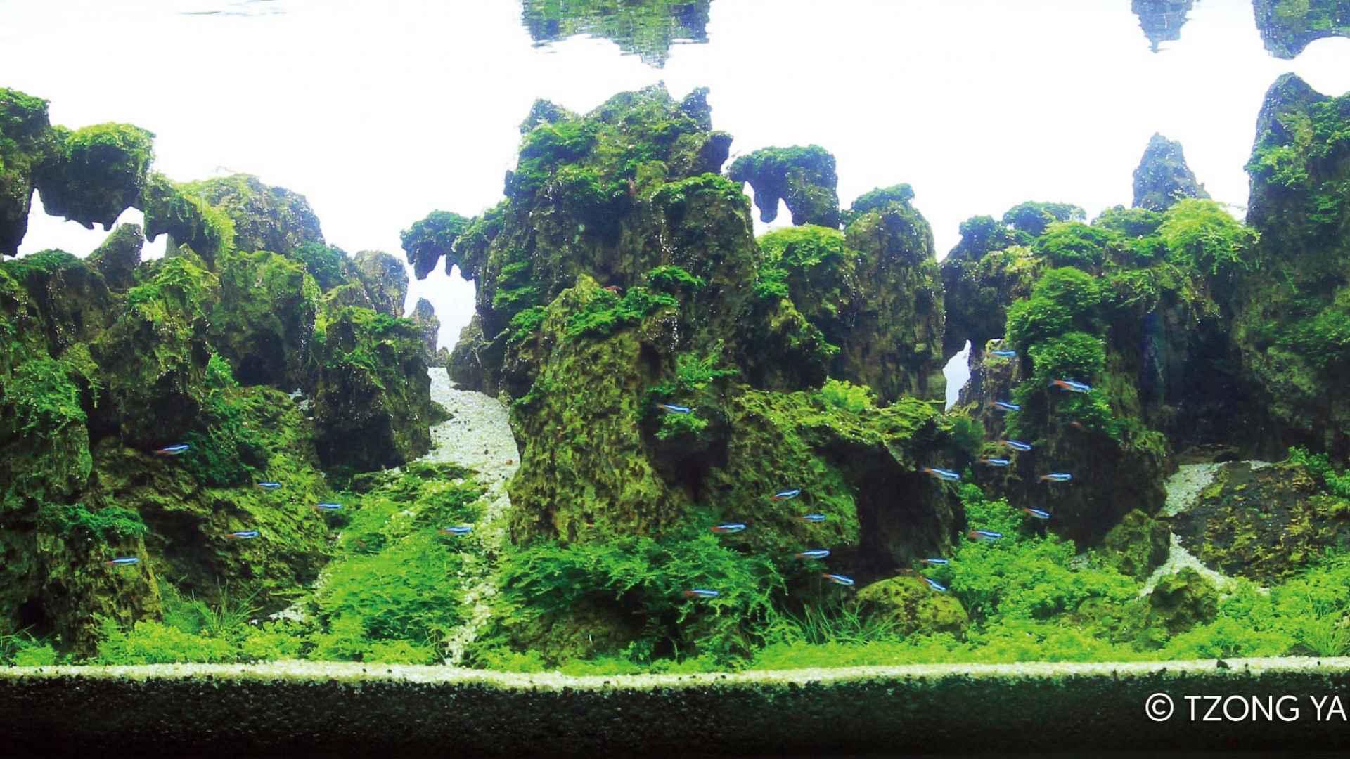 伊士达IIAC2015水草造景大赛31~40造景图片欣赏