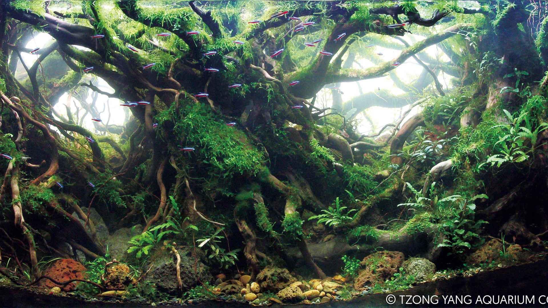 第37名 – 中国 – 叶毅 – 树界降临 – 200L ~ 320L