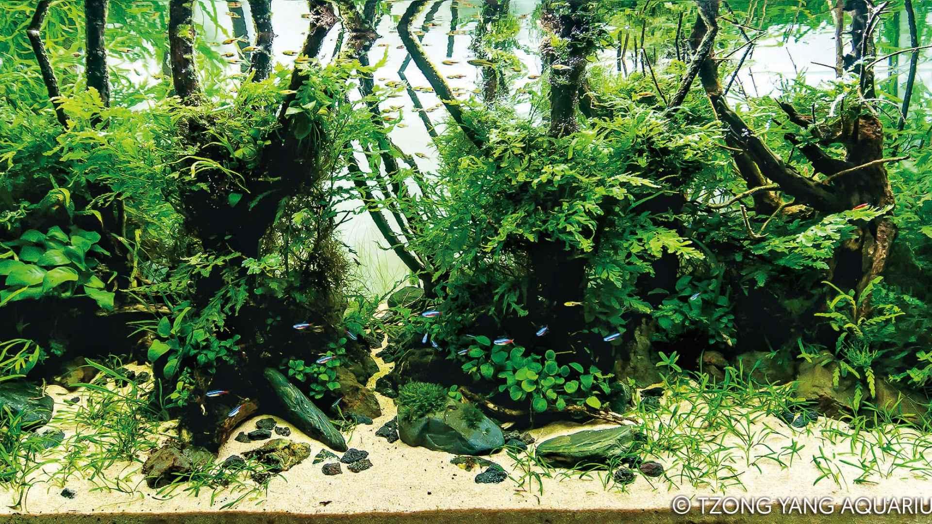 伊士达IIAC2015水草造景大赛21~30造景图片欣赏