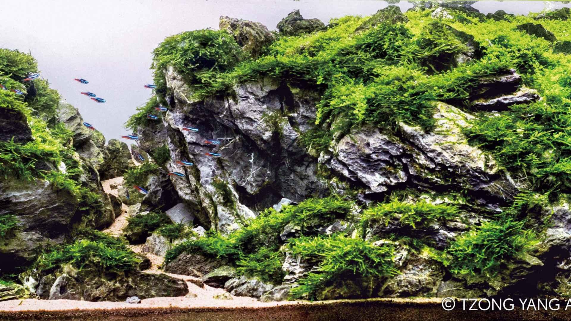 第24名 – 中国 – 杨远志 – 巨人山谷 – 200L ~ 320L