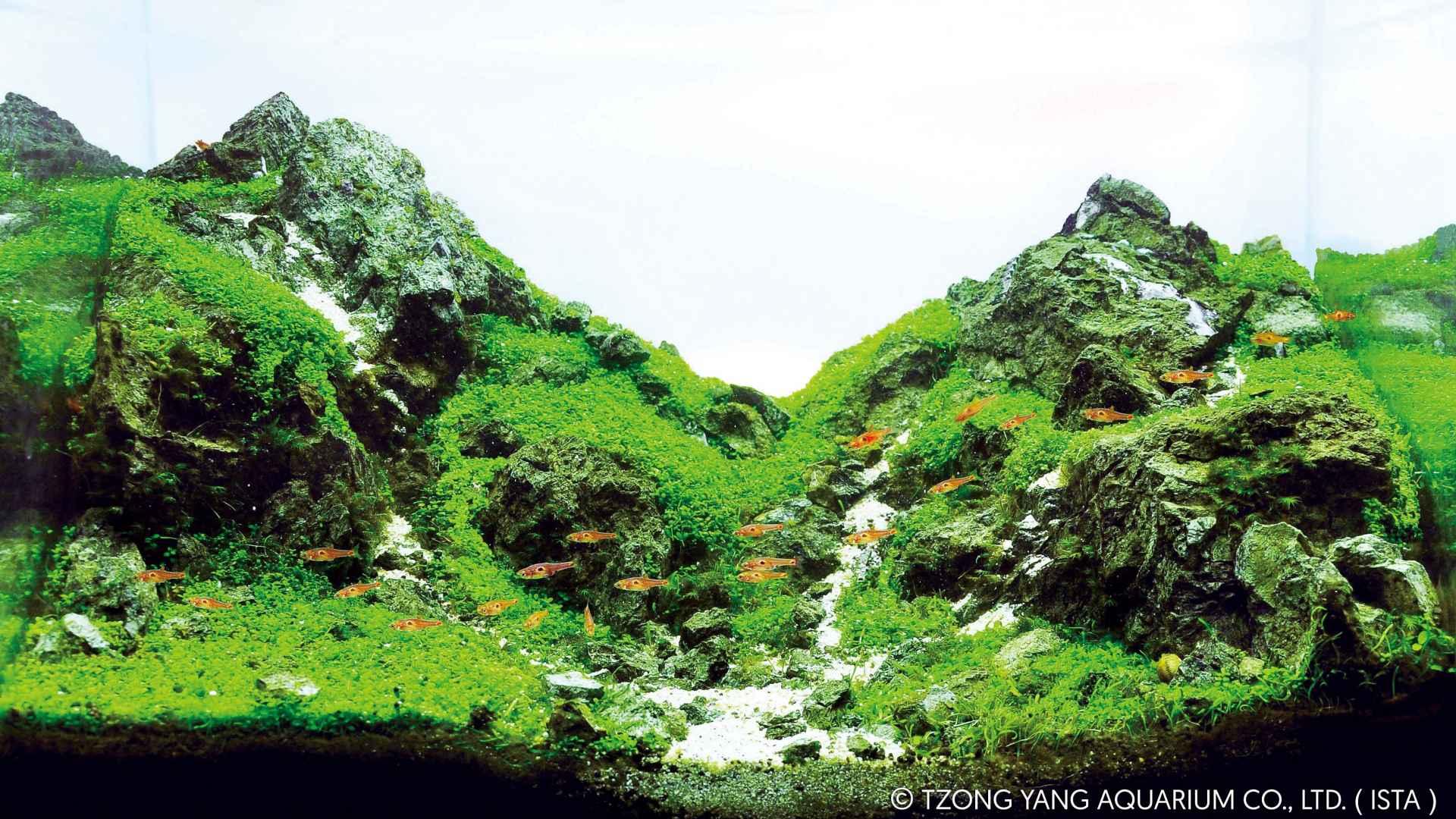 第27名 – 泰国 – Watana Supukpongvilai – On the Rock – 28L 以下