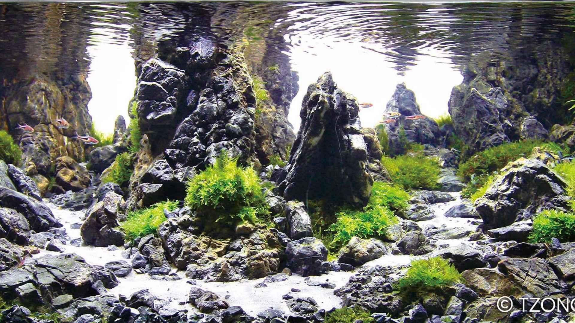 伊士达IIAC2015水草造景大赛11~20造景图片欣赏