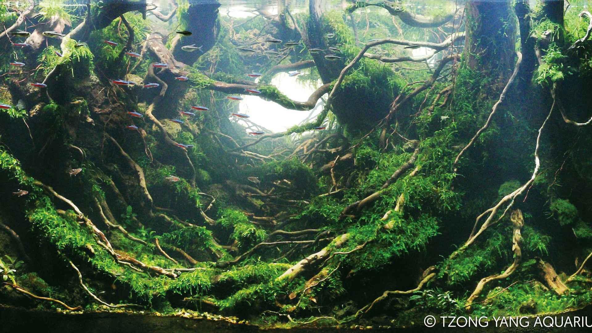 伊士达IIAC2015水草造景大赛1~10造景图片欣赏