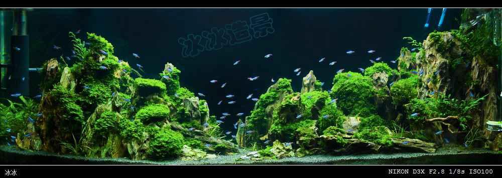 《峡谷.峰林》150cm草缸造景图片欣赏