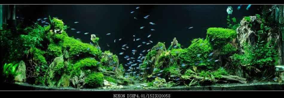国内原创水草造景鉴赏乡情之《峡谷.峰林》