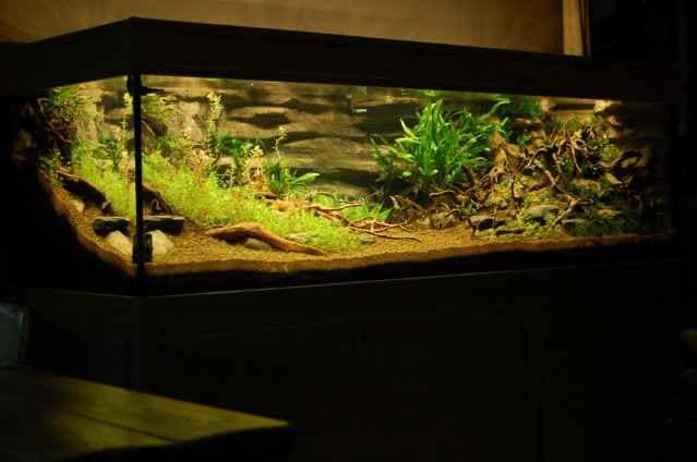 150CM家居水草缸造景作品欣赏2