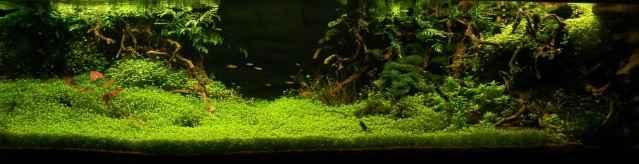 150CM家居水草缸造景作品欣赏5