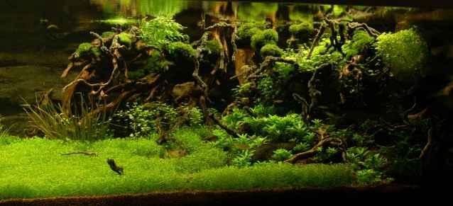 150CM家居水草缸造景作品欣赏8