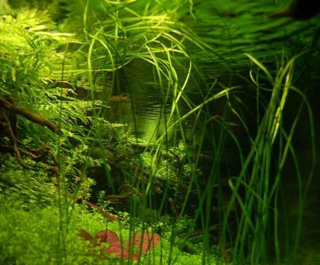 150CM家居水草缸造景作品欣赏9