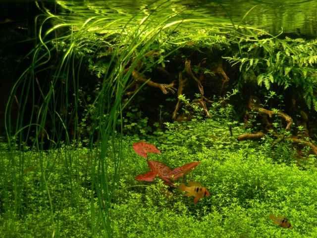 150CM家居水草缸造景作品欣赏10
