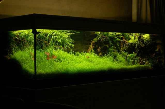 150CM家居水草缸造景作品欣赏11