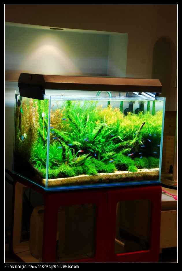 网友酸汤鱼儿60水草缸作品欣赏