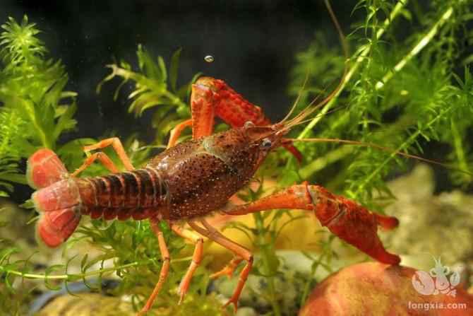 稻田养虾一般是多久下一次石灰?怎么下?
