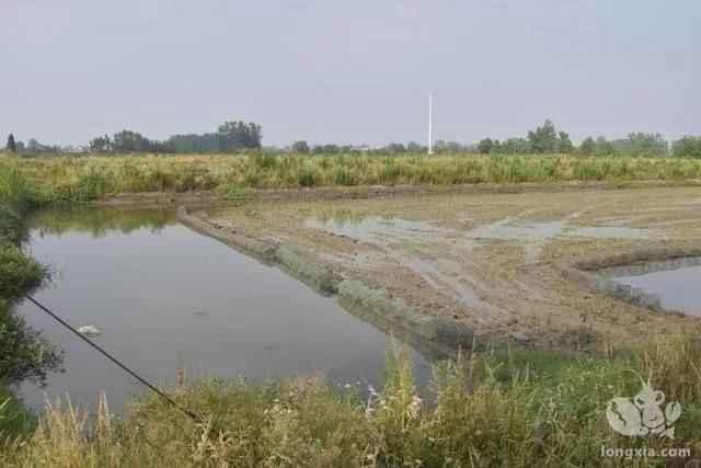 龙虾稻田秋季繁殖技术要点