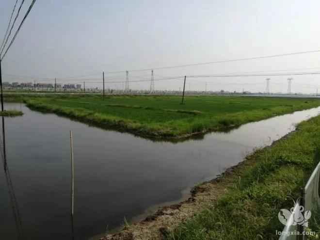 水草在小龙虾养殖中的作用