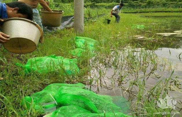 养殖龙虾需要什么条件