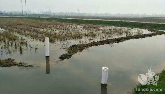 小龙虾养殖四个方面要注意,从温度到水质都不能少