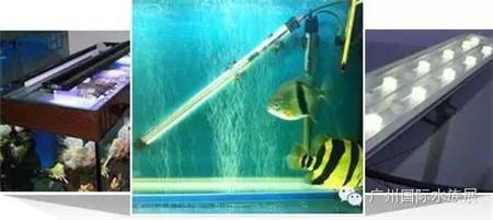 【品牌的声音】专业龙鱼灯制造商—福诺克(FROK)