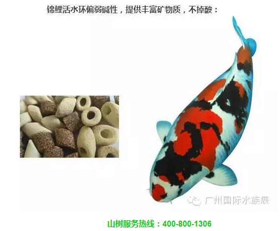 服务先行(四)山树文化—我们不是卖产品,而是提供整套养水系统保障你的爱鱼