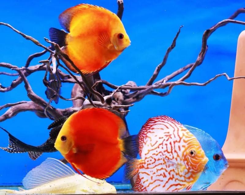 """冠军揭晓!""""缤纷水族""""观赏鱼摄影大赛圆满结束,绝美作品等你来赏!"""