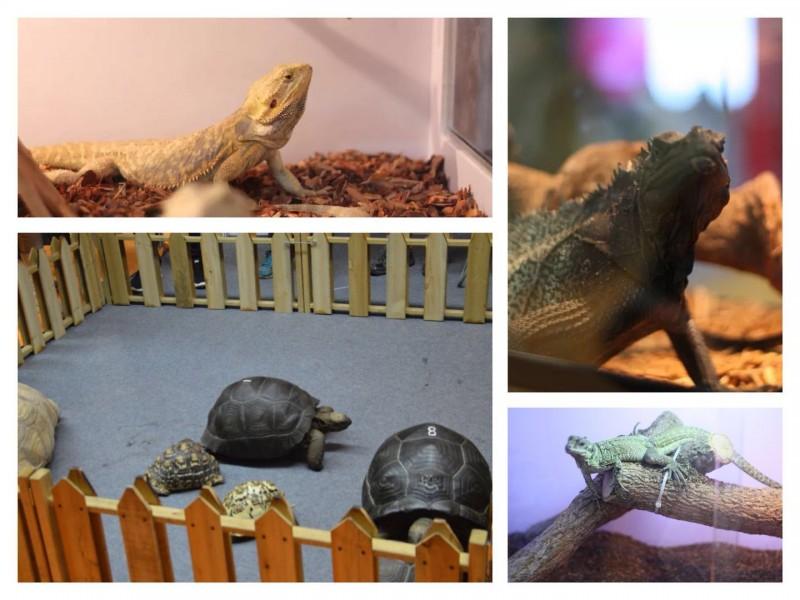 又添精彩内容!GIAS水族展同期举办国际两爬展暨龟交流会