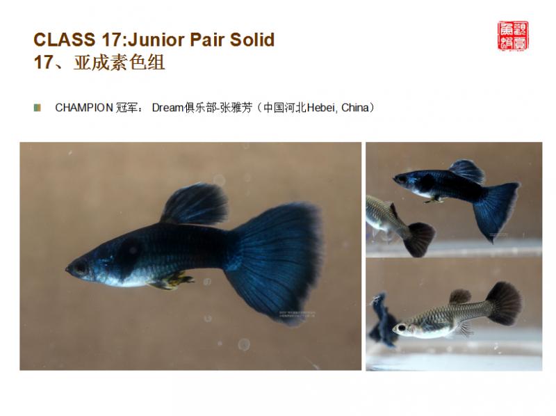展会回顾 | 广州孔雀鱼交流赛成功举办!内附获奖鱼欣赏