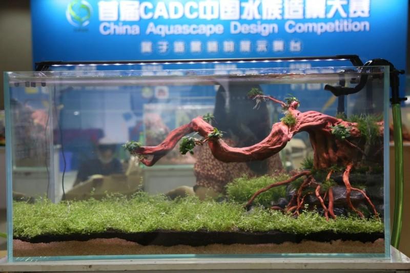 展会回顾 | CADC水族造景大赛冠军产生!