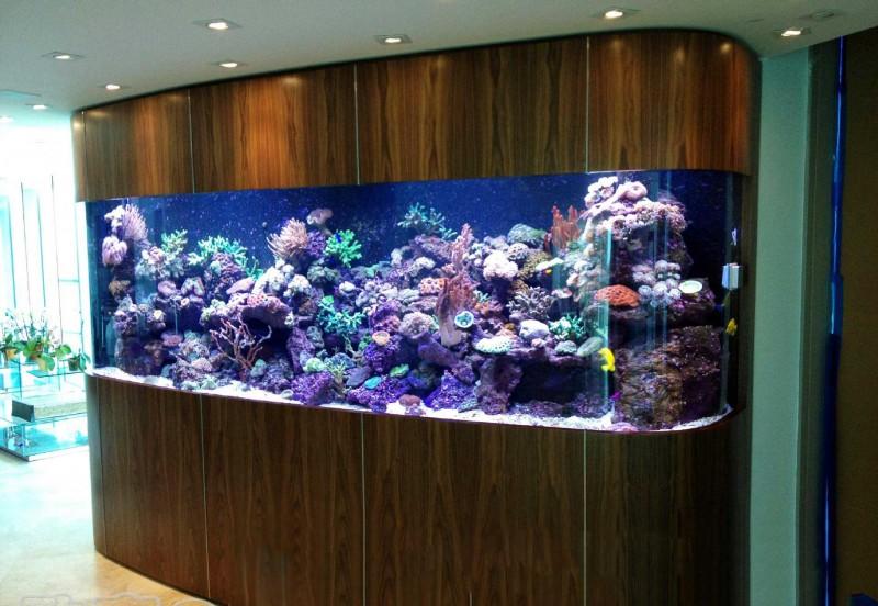 2021GIAS广州国际水族展水族箱行业解读:艺术与实用的完美结合